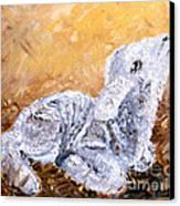 Lamb  Canvas Print by Amanda Dinan
