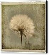 Large Dandelion Canvas Print by Linda Olsen