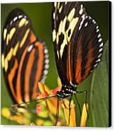 Large Tiger Butterflies Canvas Print by Elena Elisseeva