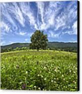 Last Tree Canvas Print by Debra and Dave Vanderlaan