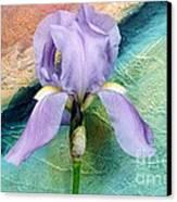 Lavendar Iris Canvas Print by Marsha Heiken