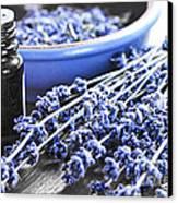 Lavender Herb And Essential Oil Canvas Print by Elena Elisseeva