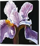 Lavender Iris On Black Canvas Print by Sharon Freeman