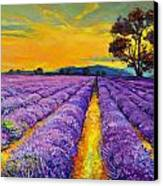 Lavender Canvas Print by Ivailo Nikolov