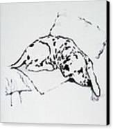 Lazy Day Canvas Print by Jacki McGovern