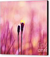 Le Centre De L Attention - Pink S0301 Canvas Print by Variance Collections