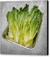 Leaf Lettuce Canvas Print by Andee Design