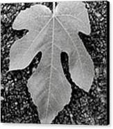 Leaf On Bark Canvas Print by Andrew Brooks