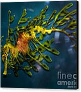 Leafy Sea Dragon Canvas Print by Artist and Photographer Laura Wrede