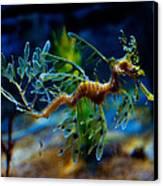 Leafy Sea Dragon Canvas Print by Tim Nichols