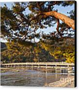 Leaning Pine Tree Arashiyama Kyoto Japan Canvas Print by Colin and Linda McKie
