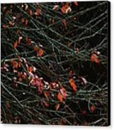 Leaves By Night Canvas Print by Guy Ricketts