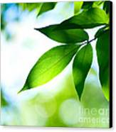 Leaves Green Canvas Print by Boon Mee