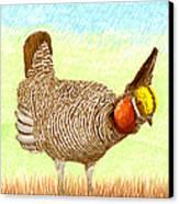 Lesser Prairie Chicken Canvas Print by Jack Pumphrey