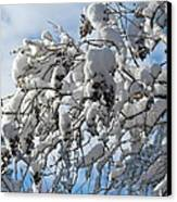 Lilac In Winter Canvas Print by Michele Myers