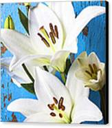 Lilies Against Blue Wall Canvas Print by Garry Gay