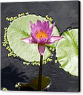 Lilly Lake Canvas Print by Carey Chen