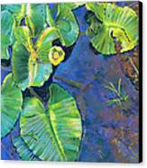 Lily Pads Canvas Print by Nick Payne