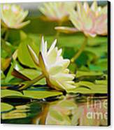 Lily Pond Canvas Print by  Fli Art