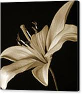 Lily Canvas Print by Sandy Keeton