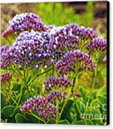 Limonium - Statice Canvas Print by Artist and Photographer Laura Wrede