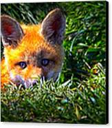Little Red Fox Canvas Print by Bob Orsillo