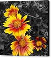 Living Color Canvas Print by Diane E Berry