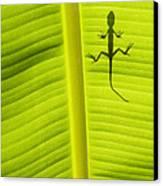 Lizard Leaf Canvas Print by Tim Gainey