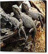Lizards Canvas Print by Les Cunliffe