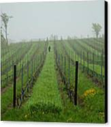 Lone Figure In Vineyard In The Rain On The Mission Peninsula Michigan Canvas Print by Mary Lee Dereske