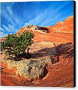 Lone Juniper Canvas Print by Inge Johnsson