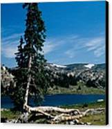 Lone Tree At Pass Canvas Print by Kathy McClure
