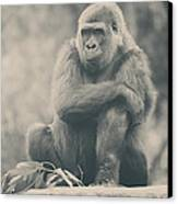 Looking So Sad Canvas Print by Laurie Search