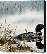 Loons Misty Shore Canvas Print by James Williamson