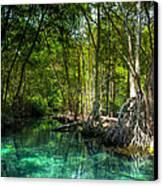 Lost Lagoon On The Yucatan Coast Canvas Print by Mark E Tisdale