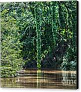 Louisiana Bayou Toro Creek Swamp Canvas Print by D Wallace