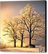 Luminous - Blue Ridge Winter Sunset Canvas Print by Dave Allen