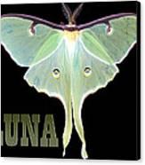 Luna 1 Canvas Print by Mim White