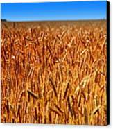 Lying In The Rye Canvas Print by Karen Wiles