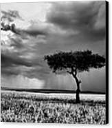 Maasai Mara In Black And White Canvas Print by Amanda Stadther