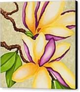 Magnolias Canvas Print by Carol Sabo
