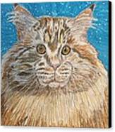 Maine Coon Cat Canvas Print by Kathy Marrs Chandler