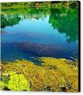 Mammoth Springs Water Vegetation Canvas Print by Cindy Croal