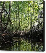 mangrove forest in Costa Rica 2 Canvas Print by Rudi Prott