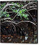 Mangrove Forest In Los Haitises National Park Dominican Republic Canvas Print by Andrei Filippov