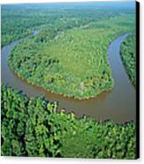 Mangrove Forest In Mahakam Delta Canvas Print by Cyril Ruoso