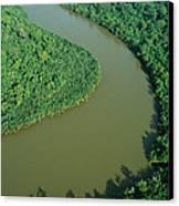 Mangrove Rhizophora Sp In Mahakam Delta Canvas Print by Cyril Ruoso