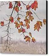 Maple In Gray Sky Canvas Print by Carolyn Doe