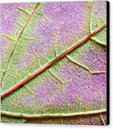Maple Leaf Macro Canvas Print by Adam Romanowicz