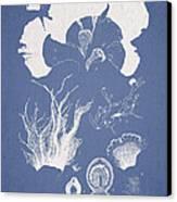 Martensia Elegans Hering Canvas Print by Aged Pixel